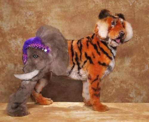 cosplay-body-painting-for-dog-8